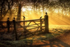 sunlight birds fence outdoors
