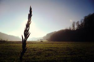 sunlight dark field plants sky landscape
