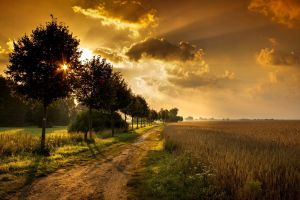 sunlight field nature trees clouds path dirt road wheat sky shadow landscape orange sunset