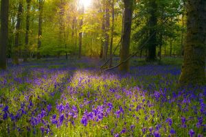 sunlight flowers forest blue flowers landscape