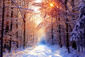 sunlight nature trees landscape road snow forest ice winter