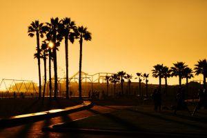 sunlight palm trees california people