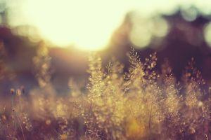 sunlight plants macro nature blurred landscape
