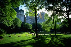 sunlight sunlight central park park trees new york city people architecture