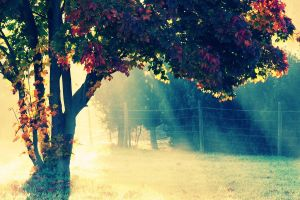sunlight trees leaves nature fence colorful fall