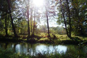 sunlight water nature pond landscape