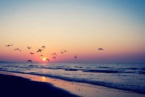 sunset birds sea nature sunlight beach