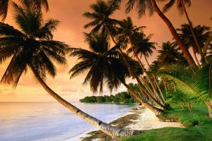 sunset palm trees nature tropical