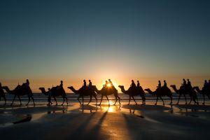 sunset sunlight landscape nature desert camels beach