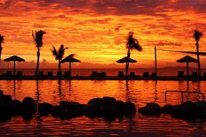 sunset sunlight landscape sea palm trees