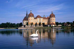 swan germany castle city lake