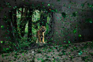 tiger digital art artwork landscape