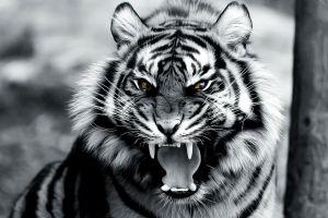 tiger digital art roar animals
