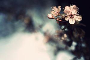 tilt shift macro nature blurred background blurred plants bokeh flowers blossoms