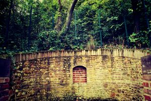 trees albi wall fence