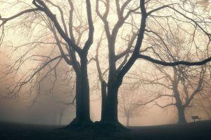 trees bench mist