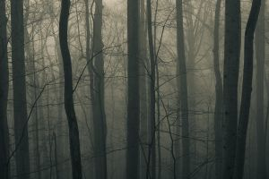 trees dark dark forest