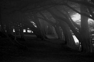 trees dark monochrome