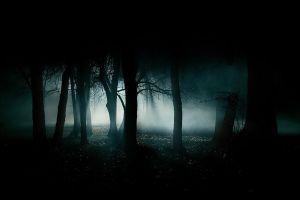 trees dark night mist