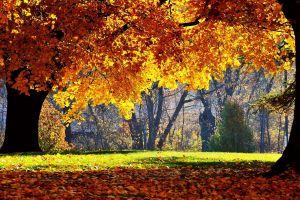 trees fall leaves nature