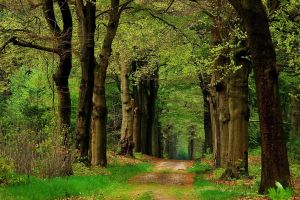 trees forest landscape path nature