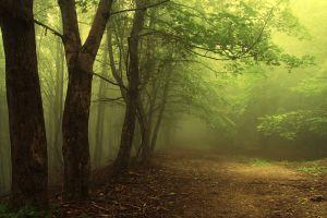 trees forest landscape plants mist nature