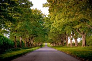 trees forest road landscape