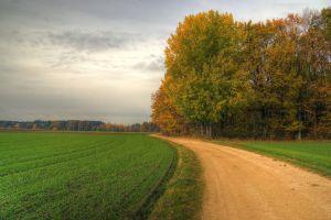trees landscape field road