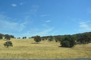 trees landscape field usa