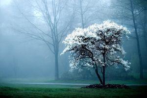 trees landscape mist