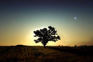 trees landscape nature stars sky