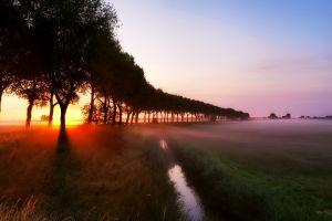 trees landscape nature sunlight