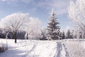 trees landscape nature winter snow