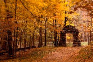trees leaves ruin nature fall