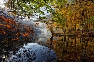 trees nature fall forest water
