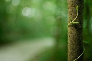 trees nature macro