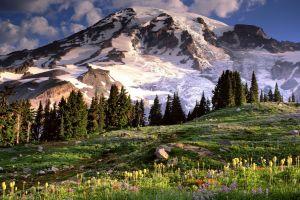 trees nature mountains