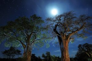 trees night nature sky landscape nebula lights