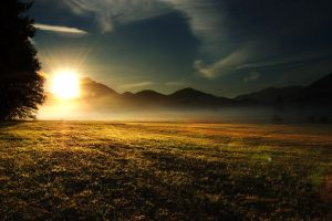 trees sunset nature field mountains mist landscape morning grass