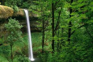 trees waterfall forest