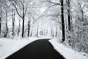 trees white winter forest black snow nature road