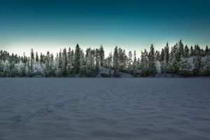 trees winter landscape snow forest