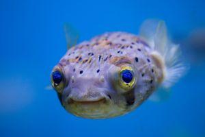 tropical fish fish animals