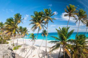 tropical palm trees sea beach