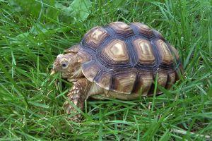turtle nature animals
