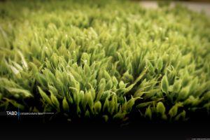typography grass macro plants