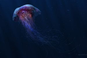 underwater digital art animals fish jellyfish
