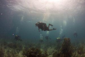 underwater divers group of people