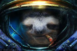 video games starcraft cigars sloths starcraft ii humor