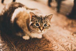 vintage blurred animals cats